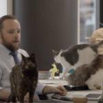 Seek Cat Day